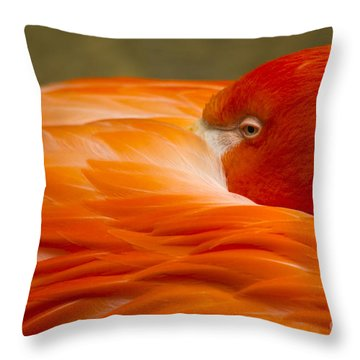 Bashful Flamingo Throw Pillow
