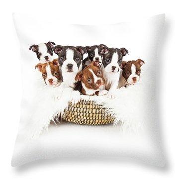 Basket Of Boston Terrier Puppies Throw Pillow
