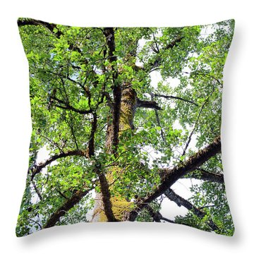 Throw Pillow featuring the photograph Basking In The Light Of The Lord by Tikvah's Hope