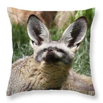 Bat-eared Fox Throw Pillow