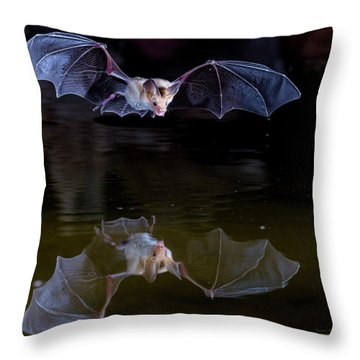 Bat Flying Over Pond Throw Pillow