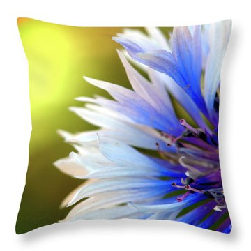 Batchelors Blue And White Button Throw Pillow