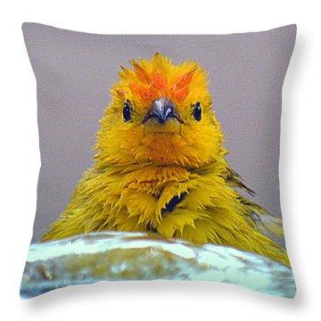 Throw Pillow featuring the photograph Bath Time Finch by Lori Seaman