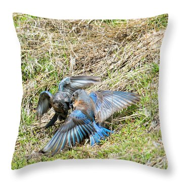 Battle For His Attention Throw Pillow