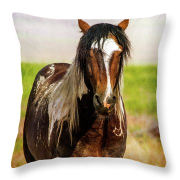 Throw Pillow featuring the photograph Battle Worn Stallion by Mary Hone