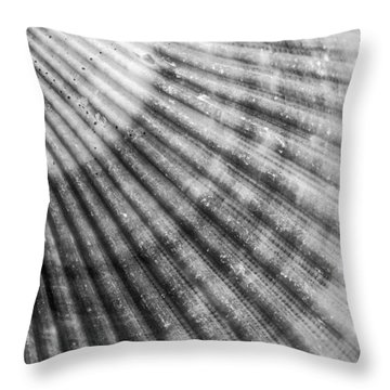 Bay Scallop Macro Throw Pillow by Heidi Hermes