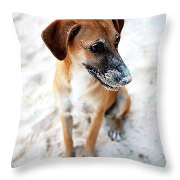Beach Dog Throw Pillow by John Rizzuto