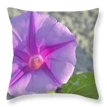 Beach Morning Glory Flower Throw Pillow