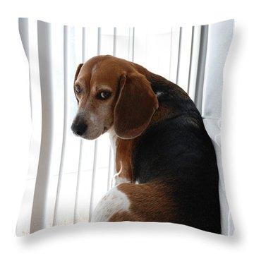 Beagle Attitude Throw Pillow by Jennifer Ancker