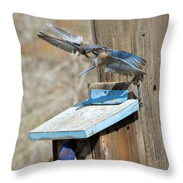 Throw Pillow featuring the photograph Beak To Beak by Mike Dawson