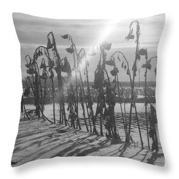Beam Of Light Throw Pillow by Mary Mikawoz