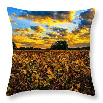 Throw Pillow featuring the photograph Bean Field Splendor  by John Harding