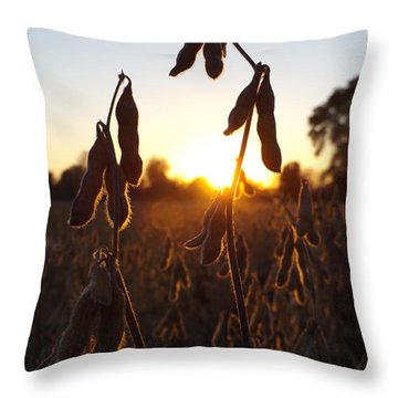Beans At Sunset Throw Pillow