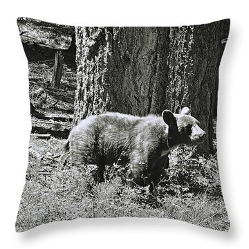 Bear Cub At Trail Of 100 Trees Throw Pillow
