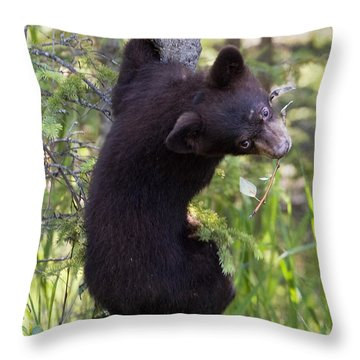 Bear Cub On Tree Throw Pillow