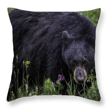 Bear Gaze Throw Pillow