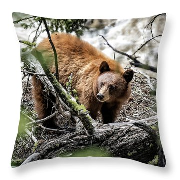 Throw Pillow featuring the photograph Bear In Trees by Scott Read