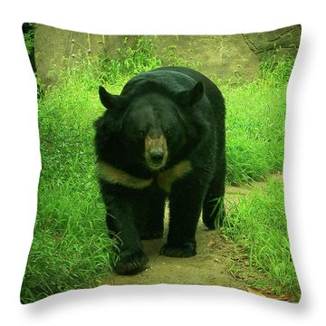 Bear On The Prowl Throw Pillow by Trish Tritz