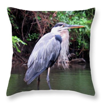 Bearded Blue Heron Throw Pillow