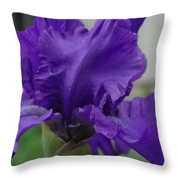 Bearded Blue Iris Throw Pillow by Robyn Stacey