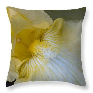 Throw Pillow featuring the photograph Bearded Iris by Cathy Donohoue