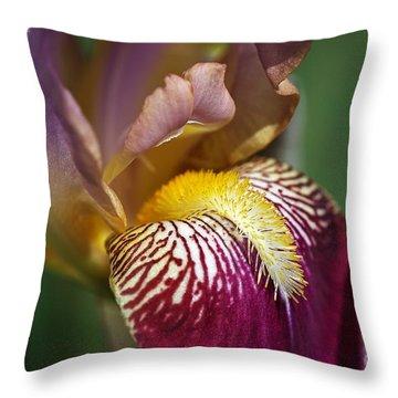 Bearded Iris Flower Mary Todd Throw Pillow