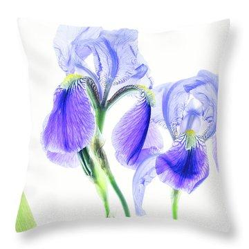 Bearded Iris Throw Pillow