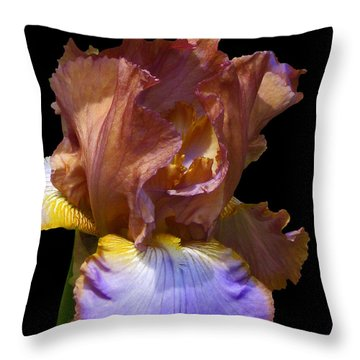 Bearded Iris With Black Background Throw Pillow by Kerri Ligatich