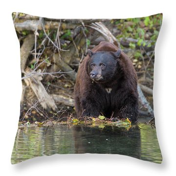 Bearing Down  Throw Pillow