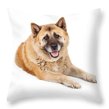 Beautiful Akita Dog Laying Throw Pillow by Susan Schmitz