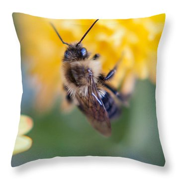 Beautiful Bee Throw Pillow