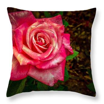 Beautiful Bicolor Rose Throw Pillow
