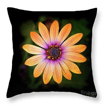 Beautiful Blue Eyed Daisy Throw Pillow