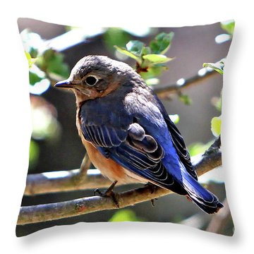 Beautiful Blue Throw Pillow by Marle Nopardi