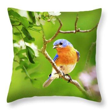 Beautiful Bluebird Throw Pillow by Christina Rollo