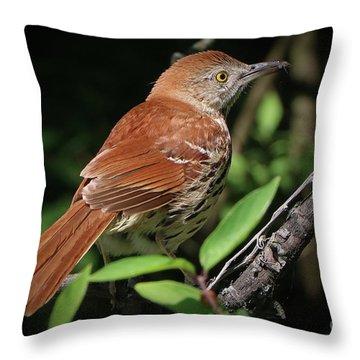 Beautiful Brown Thrasher Throw Pillow