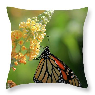 Beautiful Butterfly Throw Pillow by Karol Livote