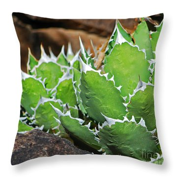 Beautiful Cactus Throw Pillow by Donna Greene