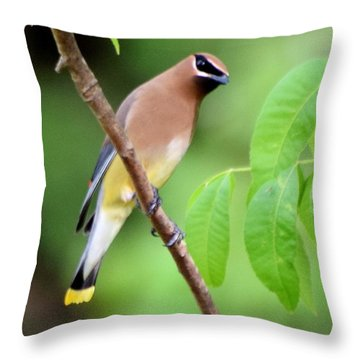 Beautiful Cedar Wax Wing  Throw Pillow by Sheri McLeroy