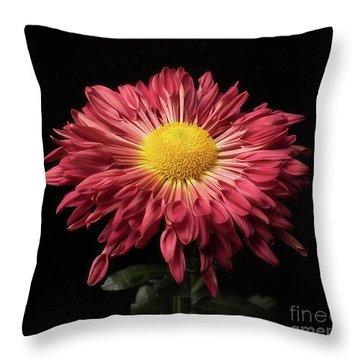 Beautiful Chrysanthemum Throw Pillow