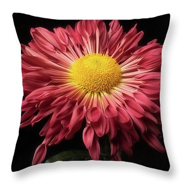 Beautiful Chrysanthemum Throw Pillow