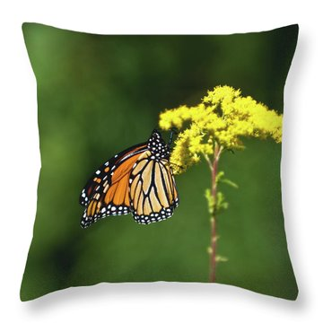 Beautiful Combination Throw Pillow