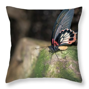 Beautiful Common Mormon Papilio Polytes Butterfly In Rose Mimicr Throw Pillow