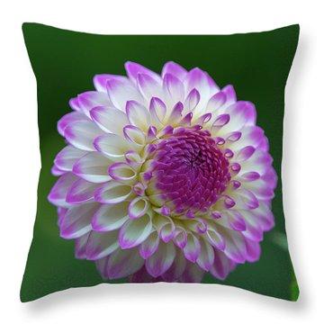 Beautiful Dahlia 2 Throw Pillow