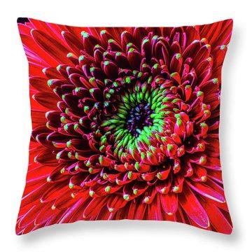 Beautiful Details Of Gerbera Daisy Throw Pillow by Garry Gay