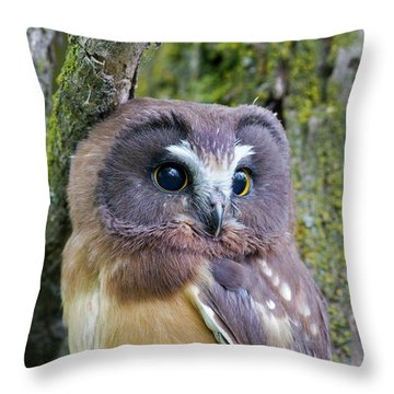 Beautiful Eyes Of A Saw-whet Owl Chick Throw Pillow