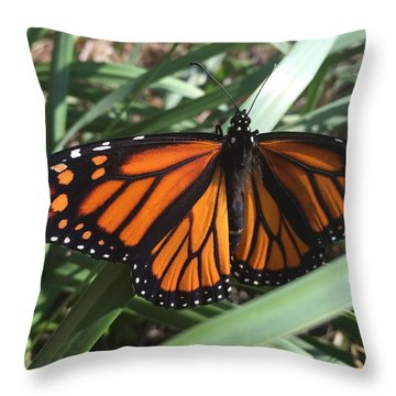 Beautiful Fall Butterfly  Throw Pillow