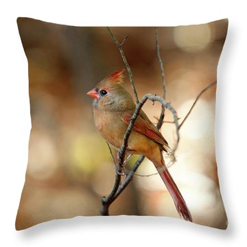 Throw Pillow featuring the photograph Beautiful Female Cardinal by Darren Fisher