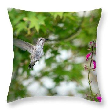 Beautiful Hummingbird Throw Pillow