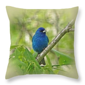 Beautiful Indigo Bunting Throw Pillow